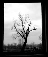 Strom v okne by petrpedros