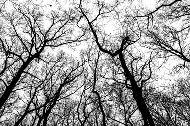 trees by petrpedros
