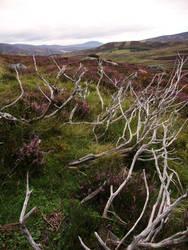 Scottish Moorland by yeanling