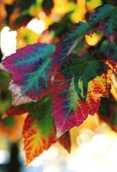 Christmas in autumn by twofuzzysumos