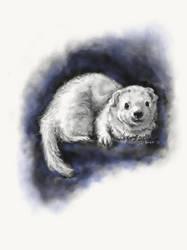 Ferret portrait 2  by dvboggs