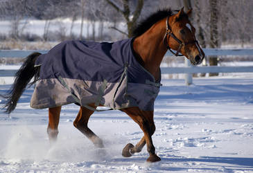 Thoroughbred in the snow by MmeLeo
