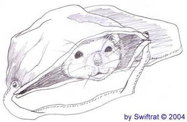 Ratty in tha Bag. by swiftrat