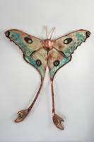 Comet Moth, Silk Moth Series by CopperMoth