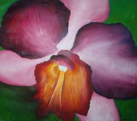 Orchid by fieryfae