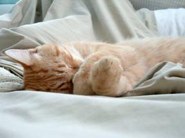 Gato sleeping by fieryfae
