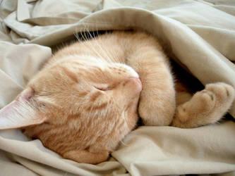 Gato sleeping 2 by fieryfae