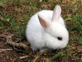 bunny by darkfae808