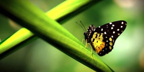 Butterfly by GTaurus