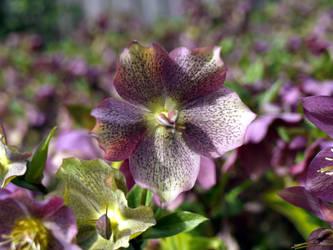 spangled flower by infra666