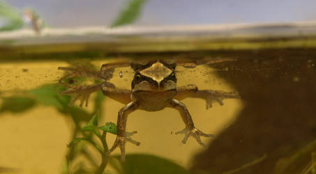 My Little Frog 2 by infra666
