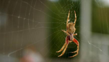 something Spider by infra666