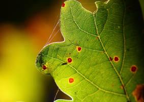 Oak Leaf by JetteReitsma