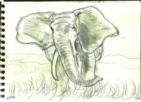 Elephant walk v882 by lv888