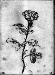 Rose In Grey v881 by lv888