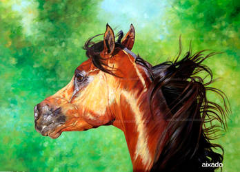 arabian horse by aixado