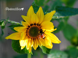 A little bee told me by gigi50