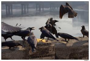 Feeding Frenzy by jadedPhotographer