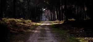 Road by cippalippa00