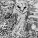Barn Owl by JoelGafford
