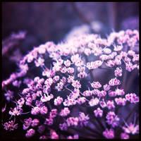 shine on me by miss-gardener
