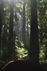 Redwood Grove by cosmic-jaguar