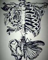 AnatomiX by Fuxiana