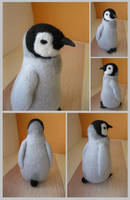 Baby Penguin, other views by thai-binturong