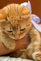 Ginger by splgum