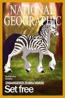 Zebra horse released into wild by Animalover99