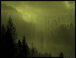Lesna Zorza by KrzysztofSokol