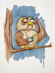 Superb Owl by diegodandrea