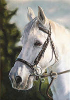 Horse Portrait Painting by KrysTheCreator