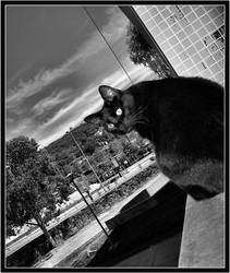 black magic cat by bawarman