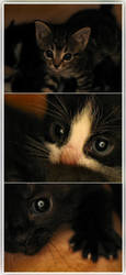 Kittens'R'Us by bawarman