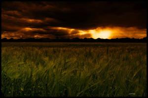 rye grass V by theoden06
