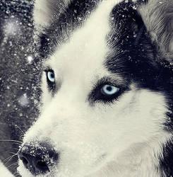 .Snow-storm by Karolayn007