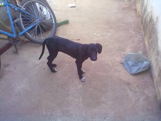 My dog by roney2011