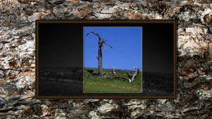 Dead Tree On Wood by LeWelsch