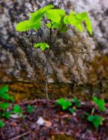 Green Little Tree by LeWelsch