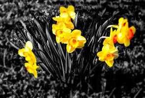Yellow Flowers by LeWelsch