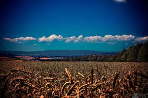 Wheat In The Heat by LeWelsch