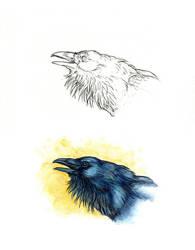. Northern raven Ill . by Maiwenn