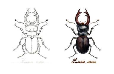 . Stag beetle . by Maiwenn