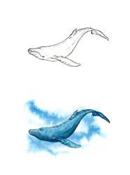 . Blue whale . by Maiwenn