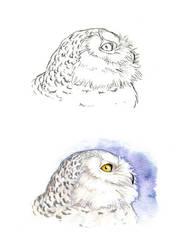 . Snowy Owl . by Maiwenn