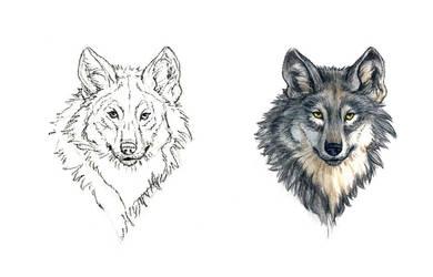 . Grey Wolf II . by Maiwenn