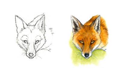 . Red fox III . by Maiwenn