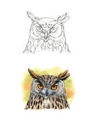 . Eagle owl II . by Maiwenn