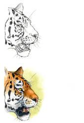 . Bengal tiger II . by Maiwenn